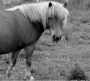 Photo de Horseastuc