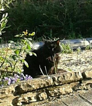 Mon chat Filou pris dans mon jardin ce soir