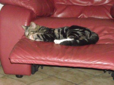 Petit Gris , mon chatons qui dort!!!!!!