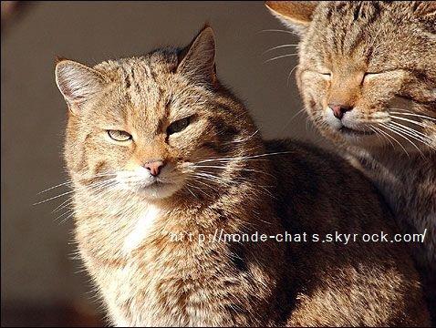 Une histoire de chat -