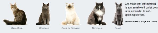 Chapitre 2 : Les races de chats.