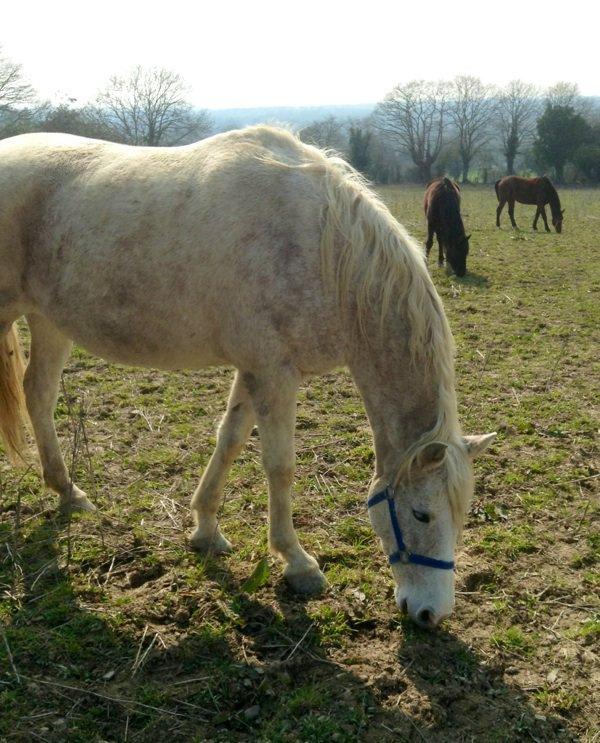Week-end en Mayenne : présentation de chevaux du pré