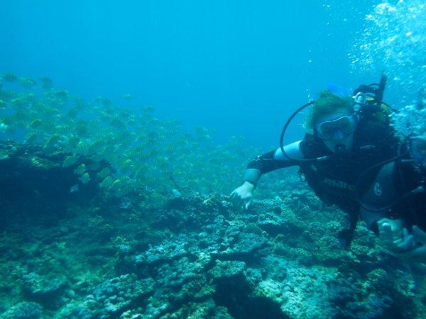 Extra La Réunion 2 : Les petits poissons dans l'eau
