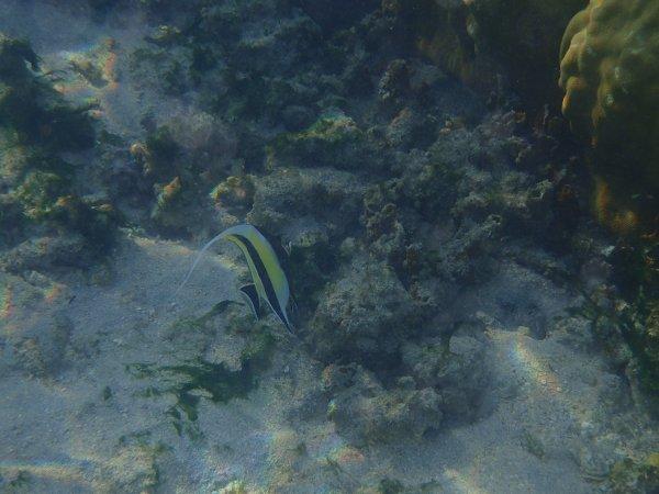 Extra La Réunion 3 (jamais 2 sans 3!) : Les poissons en mode masque et tuba