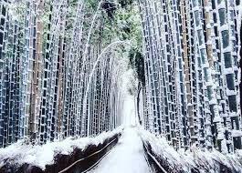 bambouseraie en hiver