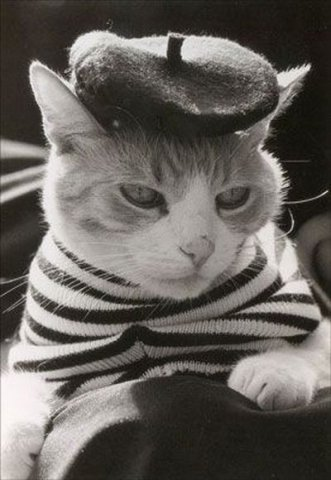 French cat lol !!