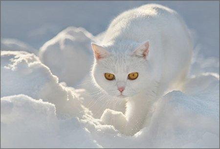 beauté des neiges (bis)