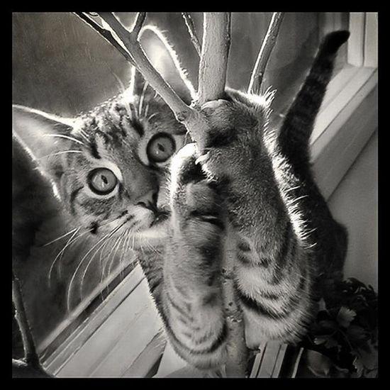 Tigre cat