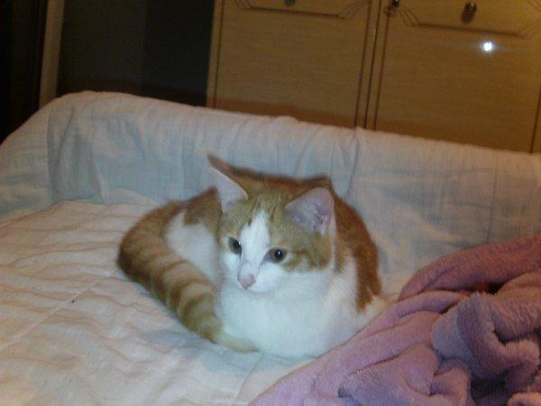 mes  chat  fifi  et  chance