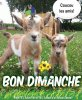 BONJOUR   MES   AMIS  NOUS  SOMMES  LE  DIMANCHE  11 JUIN  2017   C  EST LA ST BARNABE ET  A LA ST  BARNABE  ....ON N OUBLIE  PAS  DANS LES PATES  LE  FROMAGE  RAPE ...LOL