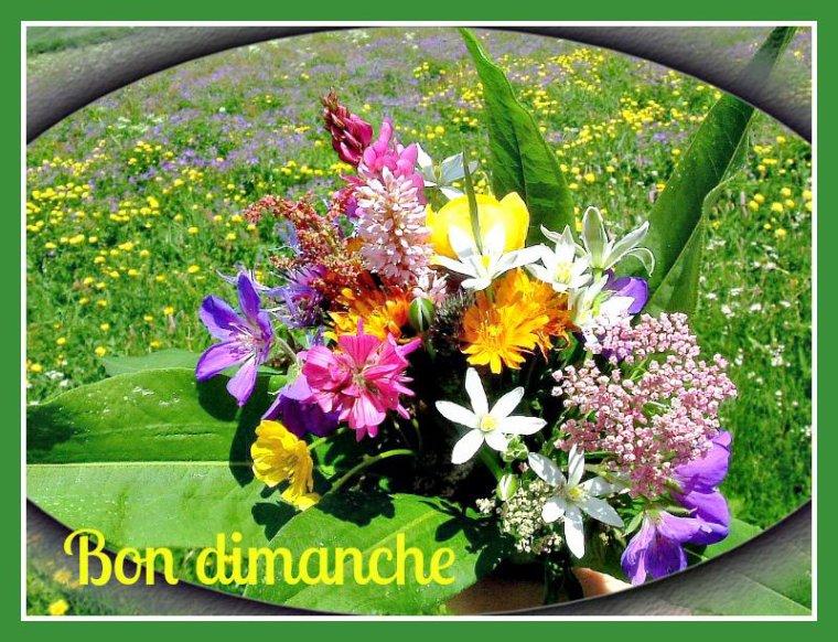 BONJOUR  MES  AMIS  NOUS  SOMMES   LE  DIMANCHE   09 JUILLET 2017  C EST  LA STE  AMANDINE ET   A  LA   STE  AMANDINE  ET  BIEN ..DE  BON  COEUR....ON   DINE   LOL....