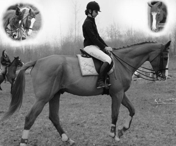 """""""Un cheval ne vous fera souffrir qu'une seule fois, le jour où il partira."""""""