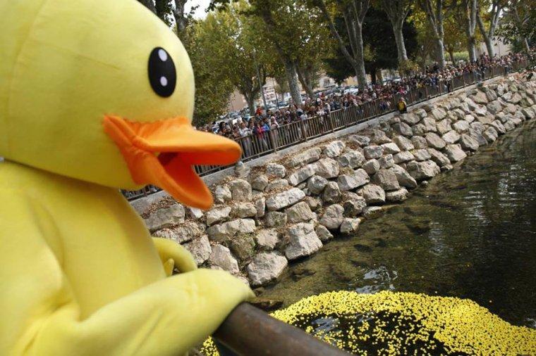 DuckRace Villeneuve-Loubet prévue en Octobre ne le loupez pas.