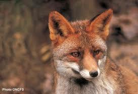 One shoot Fox's House