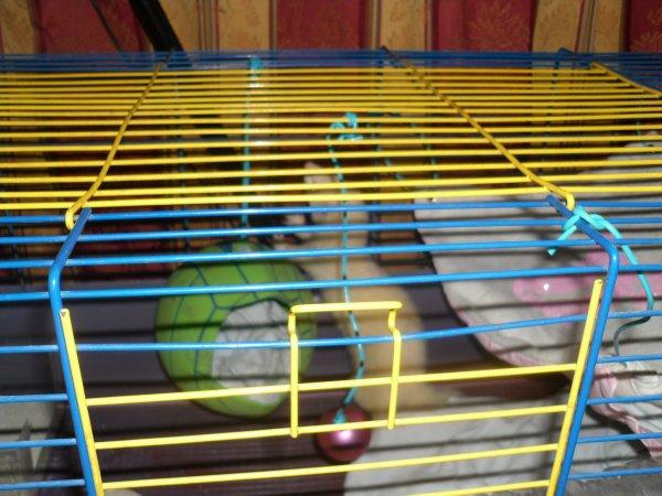 Akasha découvre sa nouvelle maison