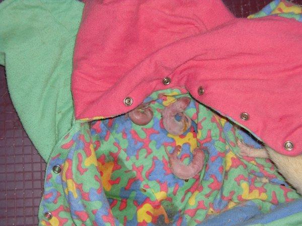 Le 30 juin 2012: Naissance des 7 bébés
