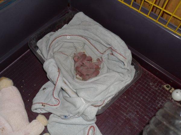 les bébés 2H00 après la naissance du dernier bébé