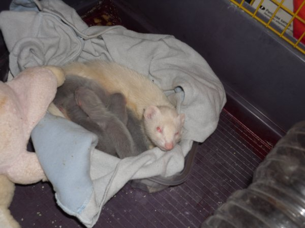 Ce qu'on est bien au chaud avec maman dans notre nid