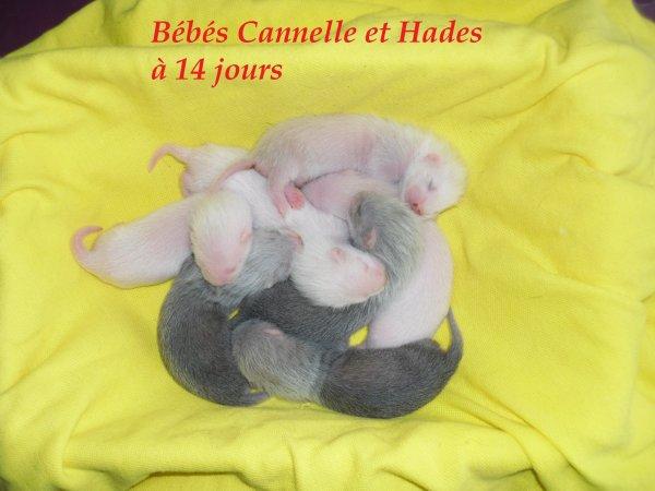 les bébés de Cannelle et Hades à 14 jours