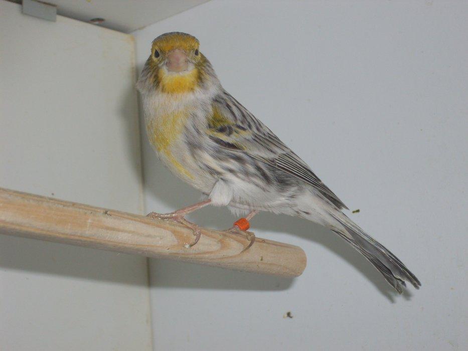 Blog von vogelsepp