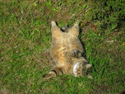 Voilà mon chat en pleine effort