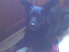 mon ti chien