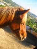 Photo de chevaux-a-sauver07