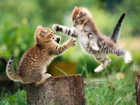 le saut du chat