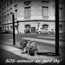 Photo de SOS-animaux-en-peril