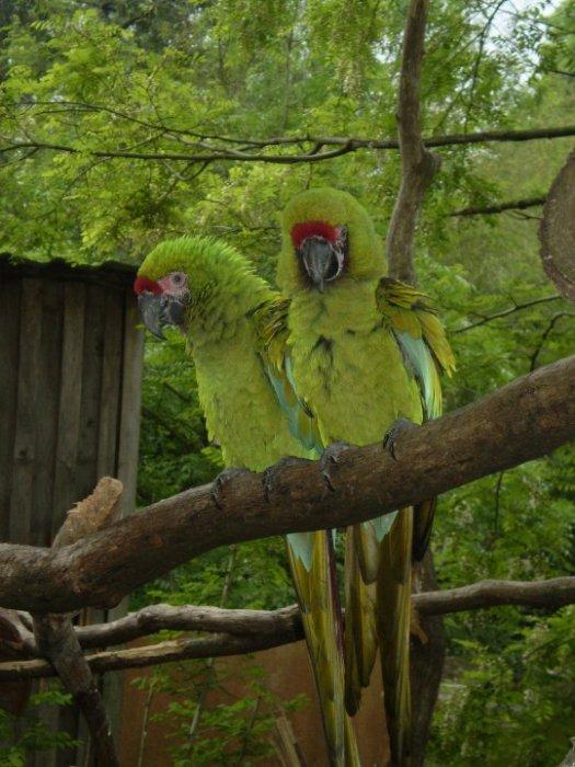 Blog de perroquet16