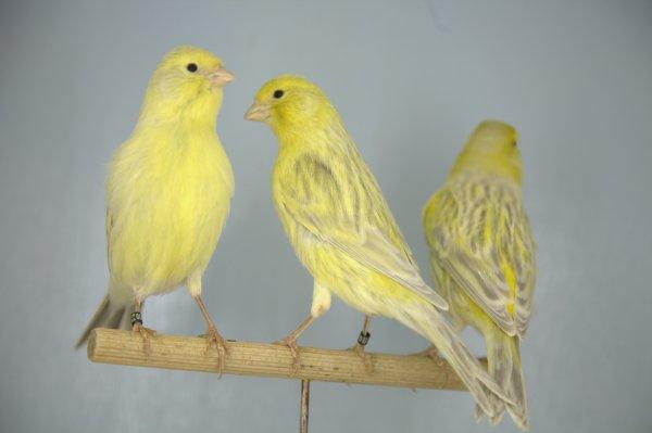 Nouveaux arrivants...agate opale jaune et jaune ivoire