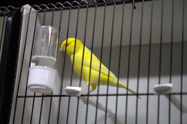 Un superbe jaune schimmel...presque aussi beau que son éleveur !!!