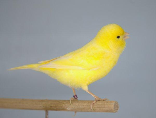 Mon premier couple de jaune...