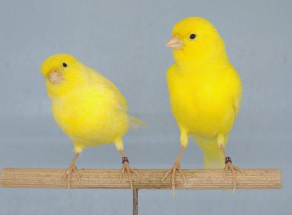 mon premier couple de jaune