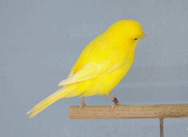 Mon deuxième couple de jaune.