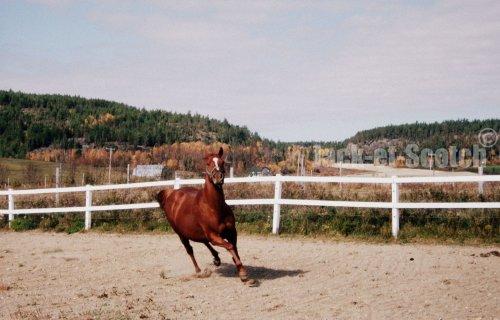Dédié à mes chevaux... ♥♥