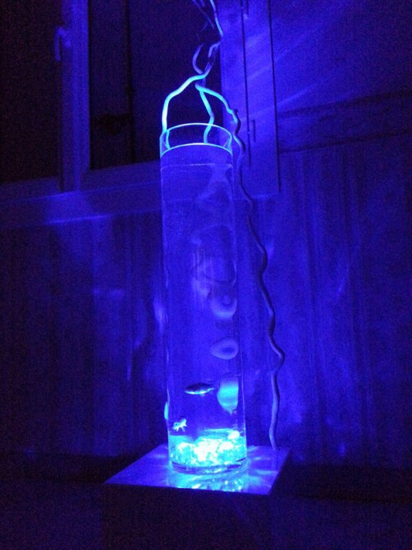 création aquarium design lumimotérapie