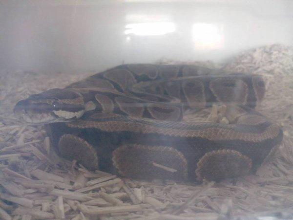 mon petit python <3