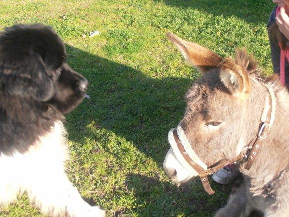 Mon chien floyd et Mon âne pulco <3 ! rien de mieu que c'est 2 monstres !!!