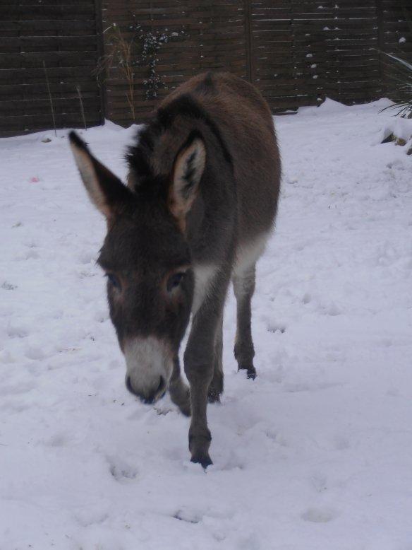 Mon ange dans la neige :) et Mon grop nournours