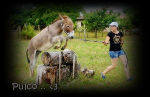 Pulco toujour plus hauts !! ♥