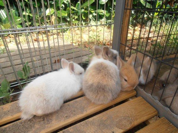 Mes bébés lapins ♥