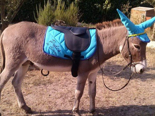 Il et beau mon âne ♥♥