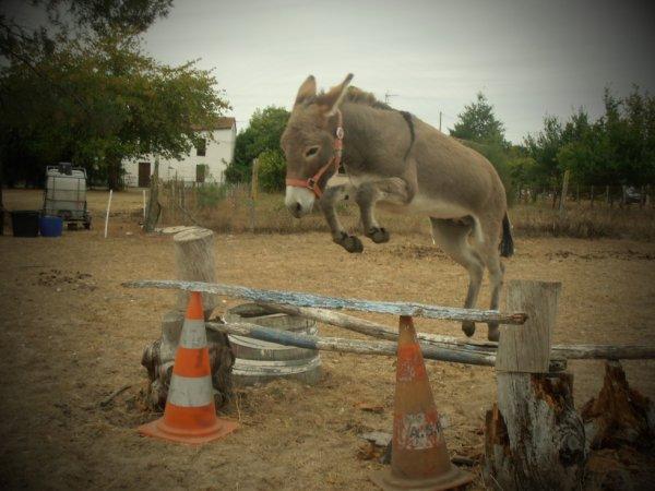 séance  de saut avec mon âne le 11.09.2012