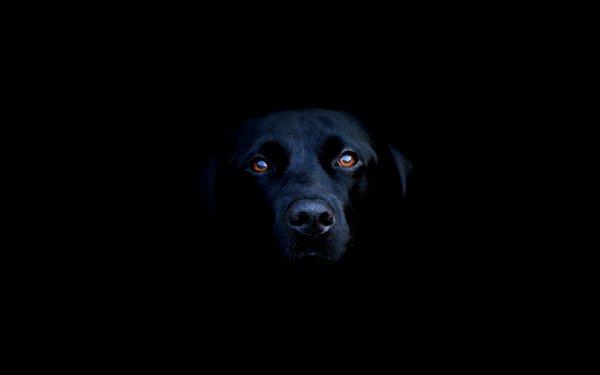 le petit chien  noir :)