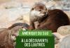 Loutre-du-Chili
