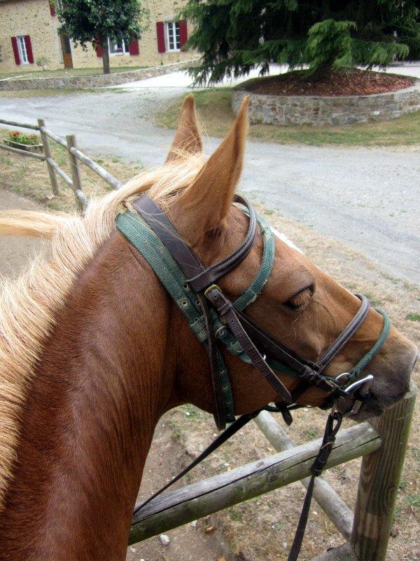 Être à cheval, c'est être entre ciel et terre à une hauteur qui n'existe pas. ♥
