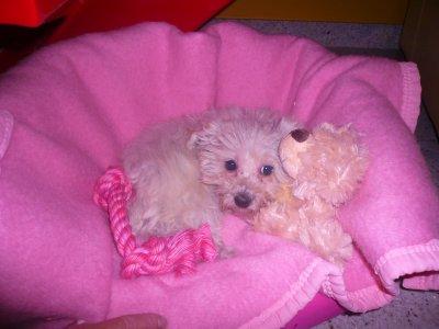 Mon petit bébé de channel , ton arriver a la maison le 15/012/011 ބ !