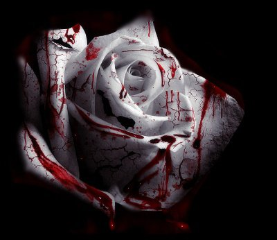 Une rose ....