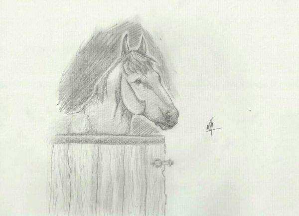 Cheval dessiné au crayon. Pour Ulfira ;-)